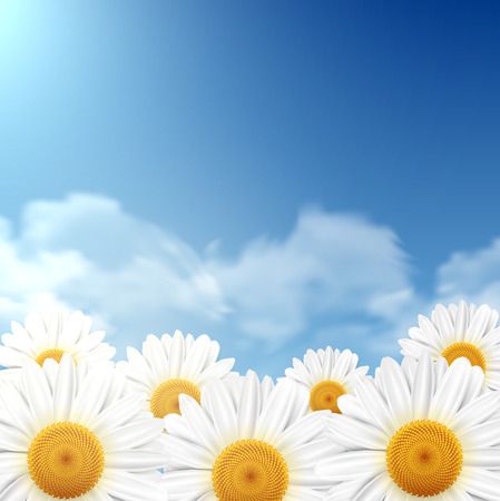 Daisy flowers with a blue sky as a background, illustration.