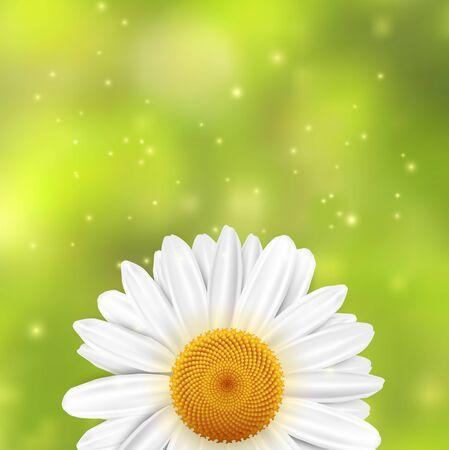 Flor de la margarita en un fondo borroso verde con destellos. ilustración.
