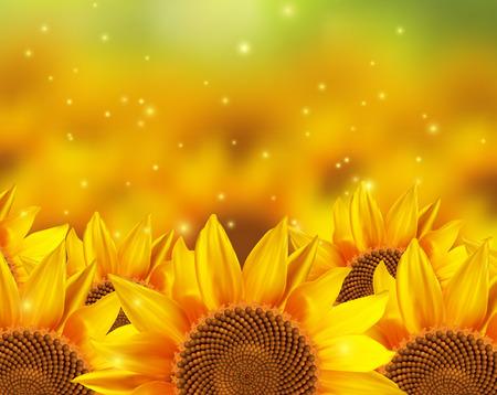 sunflower field: A field off sunflowers. illustration.