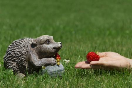 Strawberries for hedgehog Stock Photo - 15091452
