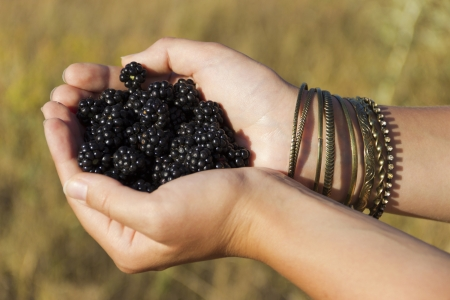 Blackberries in the hands Stock Photo - 15091420