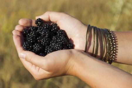 Blackberries in the hands Stock Photo - 15091420