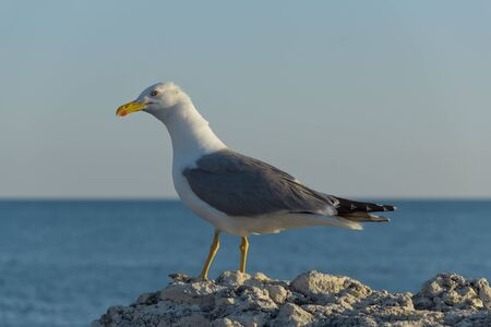 Seagull walking on rocks