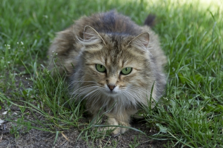 moustached: The green-eyed cat in the grass