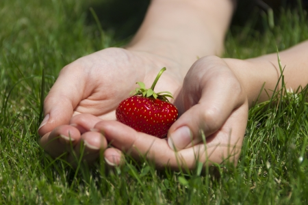 Juicy ripe strawberries in a gentle female hands Stock Photo