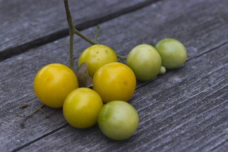 Yellow ripe tomatoes on the table. Appetizing! Stock Photo