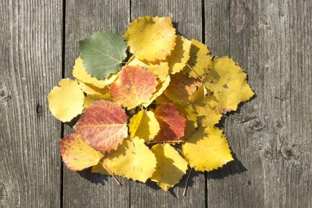 Les feuilles jaunes se trouvent sur la table en bois