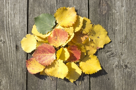 Yellow leaves lie on the wooden table Stock Photo