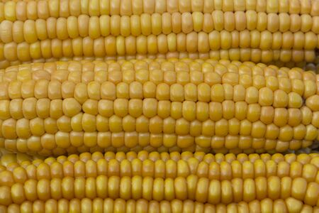 Ear of ripe yellow corn looks delicious Stock Photo - 15558770