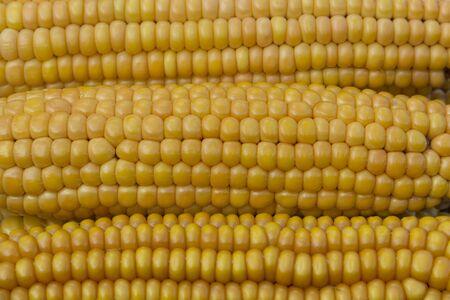 Ear of ripe yellow corn looks delicious Stock Photo - 15558770