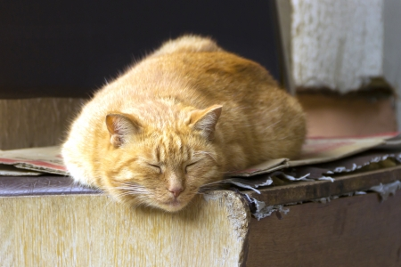 Big red cat sleeping on a bench