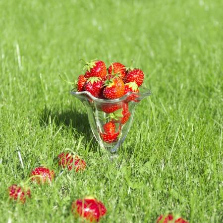 Red fraises juteuses dans le verre sur l'herbe