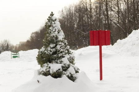 Small green arborvitae covered with snow near the red plate Stock Photo