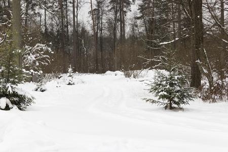 Route enneig�e dans la for�t d'hiver color�