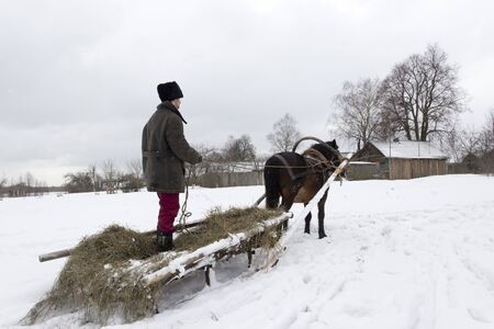 Man standing on the sled rides on the horse