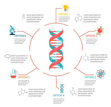 DNA structure infographic Illustration