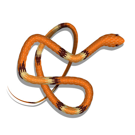Realistic snake, vector illustration. Top view of snake isolated