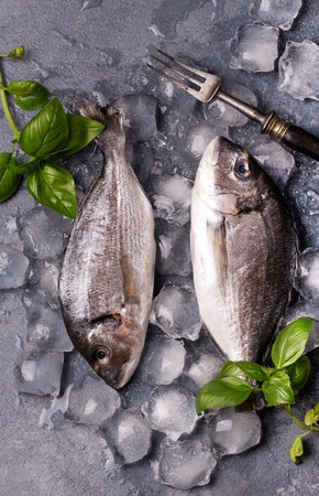 gilthead bream: Raw delicious fresh fish on ice on dark gray background. Gilt-head sea bream fish on ice. Decorated with basil.