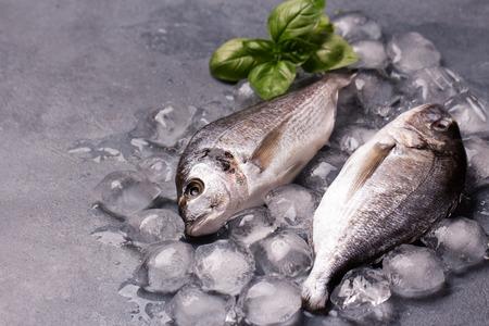 Peixes frescos deliciosos crus no gelo no fundo cinzento escuro. Peixes da brema de porca-cabeça no gelo. Decorado com manjericão. Copie o espaço.