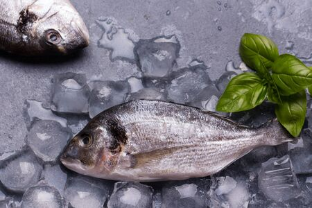 gilt head: Raw delicious fresh fish on ice on dark gray background. Gilt-head sea bream fish on ice. Decorated with basil.
