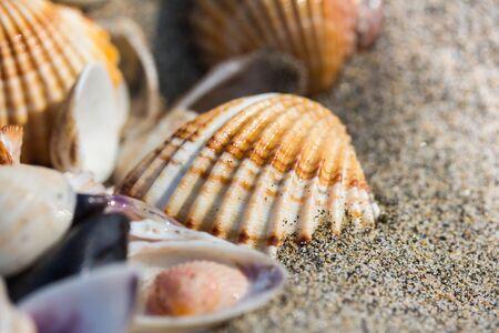 Sea shell on sand beach close up. Stock Photo