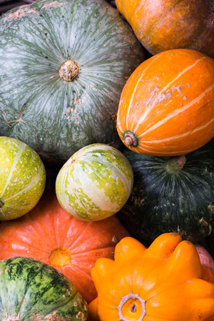 Varieties of pumpkins and squashes collection.