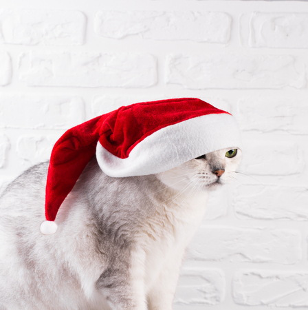 Funny unhappy Cat in Santa Claus red hat on white background
