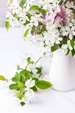 Spring flowers. Apple tree blossom with green leaves on white background. Copy space Stock fotó
