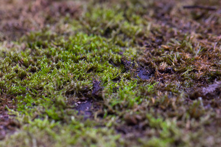 Green moss as background, grunge texture. close up