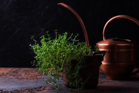 Thyme bunch in copper pail. Bundle of fresh thymes on a grunge metal background.
