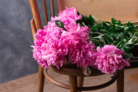 Beautiful pink peony flowers on vintage chair in front of grey wall.