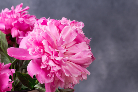 Beautiful pink peony flowers in front of grey wall. Stock Photo