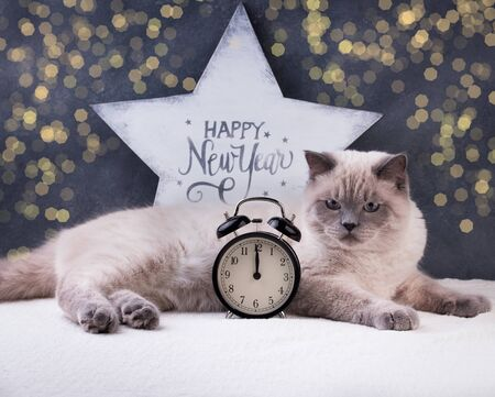 Cat. Christmas party, winter holidays cat with new year symbols. New year cat. Holiday concept Reklamní fotografie