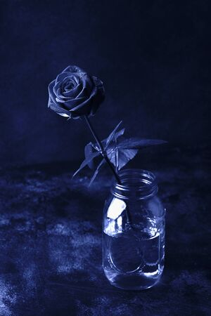 one red rose on a black background, toned in classic blue color. Trendy color 2020 year