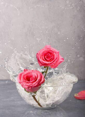Pink Rose Flower in a Vase on grey background