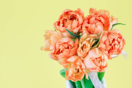 Fresh yellow double early tulip flowers bouquet in front of yellow background.