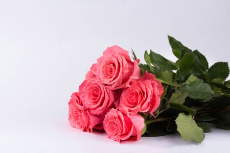 Valentines day background with pink roses. Isolated on white with copy space. Valentines day concept 版權商用圖片