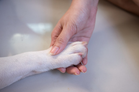 human hand holding a paw Stock Photo