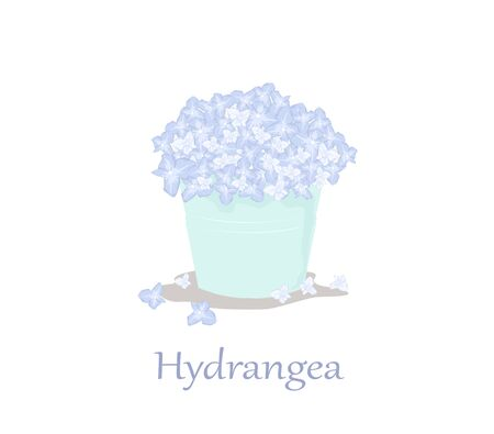 Hydrangea flower bouquet in green vase isolated on white background. Hydrangea flower Vector.