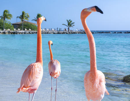 Beautiful flamingos on the beach Imagens - 94214542