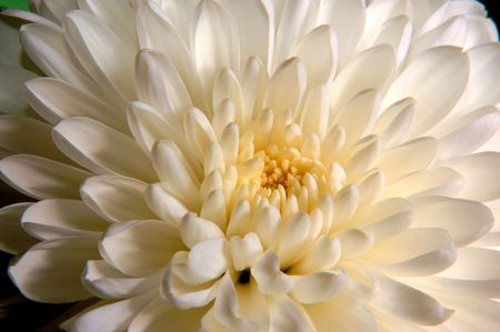 White flower close up