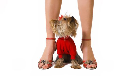 Female legs and a small dog photo