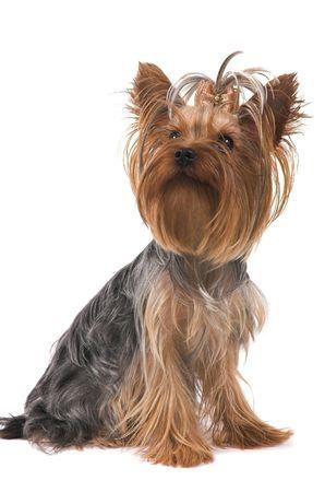 Small dog  Stock Photo