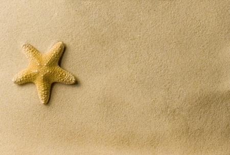 sandy beaches: a sea star on the beach Stock Photo
