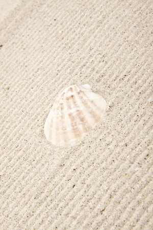 pearl on the seashell photo
