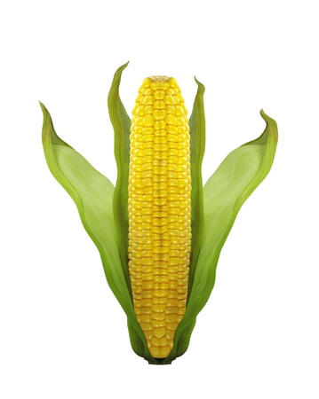 corn isolated on white background photo
