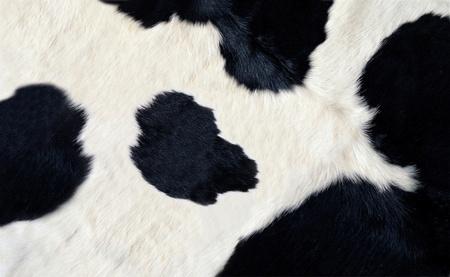 reales en blanco y negro de piel de vaca Foto de archivo