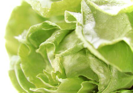 vibrat: Lettuce