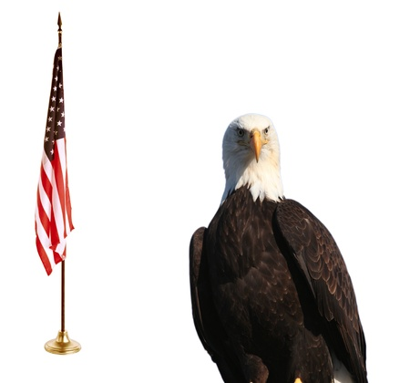 Bald eagle with American flag Stock Photo - 11948607