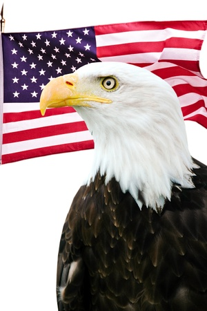 Bald eagle with American flag photo